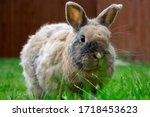 A Small  Light Brown Rabbit...