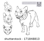 line art of french bulldog with ... | Shutterstock .eps vector #171848813