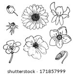 stock set with vintage flower... | Shutterstock . vector #171857999