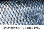 Art Real Walleye Fish Scales...