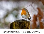 European Robin Sitting On A...