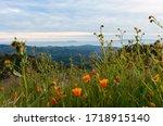Wildflowers On Sulpher Mountain ...
