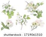 White Flowering Dogwood On...