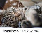 Cat Sleeping Muzzle Close Up....