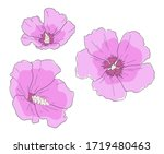 rose of sharon  hibiscus...   Shutterstock .eps vector #1719480463