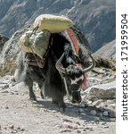 Small photo of Yak caravan near Dusa - Everest region, Nepal
