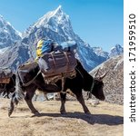 Small photo of Yak caravan near Dusa - Everest region, Nepal, Himalayas