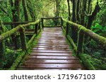 Wet Wooden Trail Bridge Walking ...