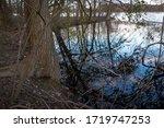 Lake, Cutler Park reservation, MA