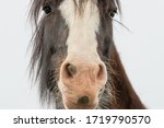 Brown Colored Horse With Large...