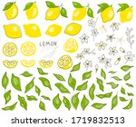 whole lemon cut in half  slice  ... | Shutterstock .eps vector #1719832513