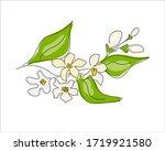 branch of a citrus tree   lemon ... | Shutterstock .eps vector #1719921580
