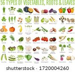 56 vegetables icons   this... | Shutterstock .eps vector #1720004260