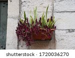 Flower Box In The Old Town Of...