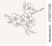 sketch floral botany collection.... | Shutterstock .eps vector #1720271320