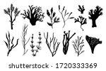 seaweed  coral and algae set.... | Shutterstock .eps vector #1720333369