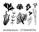 seaweed  coral and algae set.... | Shutterstock .eps vector #1720444576
