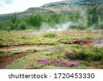 Iceland Summer Flowers...