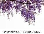 Selective Focus Of Purple...