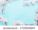 Small photo of Sakura blossom flowers and may floral nature on blue background. For banner, branches of blossoming cherry against background. Dreamy romantic image, landscape panorama, copy space.
