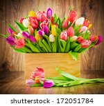 tulips in the box on wooden... | Shutterstock . vector #172051784