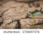 Growth Of Trees In Drought...