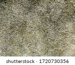 Moss Covered Concrete. Clean...