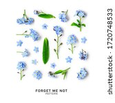 Blue Forget Me Not Flowers...