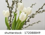 white tulips and pussy willows | Shutterstock . vector #172088849