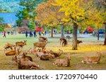 Japan. Nature Park In Nara....