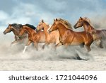 Horse Herd  Galloping On Sandy...