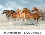 Horse Herd  Galloping On Sandy...