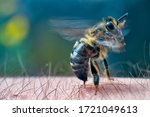 The bee stings into human skin. ...