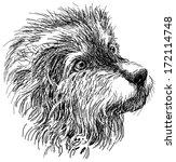 head of shaggy dog   Shutterstock . vector #172114748