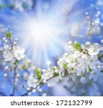 Cherry Blossoms Over Blurred...