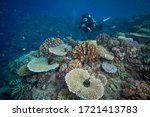 Great Barrier Reef  Qld  ...