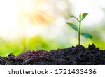 Small photo of Agriculture and plant grow sequence with morning sunlight and green blur background. Germinating seedling grow step sprout growing from seed. Nature ecology and growth concept with copy space.