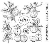 vector sketch apple decorative... | Shutterstock .eps vector #1721527813