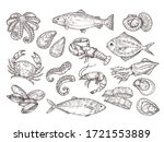 Seafood Sketch. Vintage Fish ...