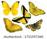 Beautiful Yellow Butterflies...