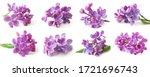 Beautiful Lilac Set Isolated O...