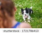 beautiful border collie puppy... | Shutterstock . vector #1721786413