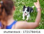 beautiful border collie puppy... | Shutterstock . vector #1721786416