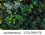 Lush Foliage Background. Green...