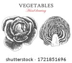 set cabbage whole and in a cut.... | Shutterstock .eps vector #1721851696