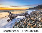 Washed Up Tree Trunk Driftwood...