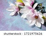 Beautiful Pink Magnolia Flowers ...
