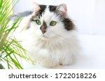 Beautiful Portrait Of Cat Smile ...