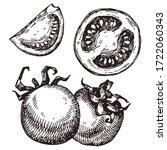 hand drawn tomato. vector...   Shutterstock .eps vector #1722060343