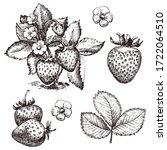 strawberry hand drawn vector...   Shutterstock .eps vector #1722064510